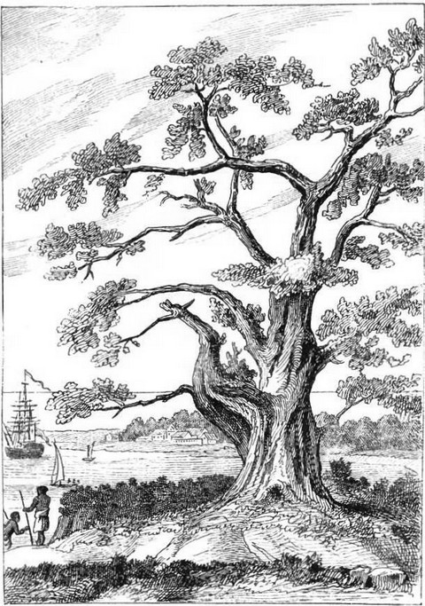Tree, from beneath which Cook observed the transit of Venus